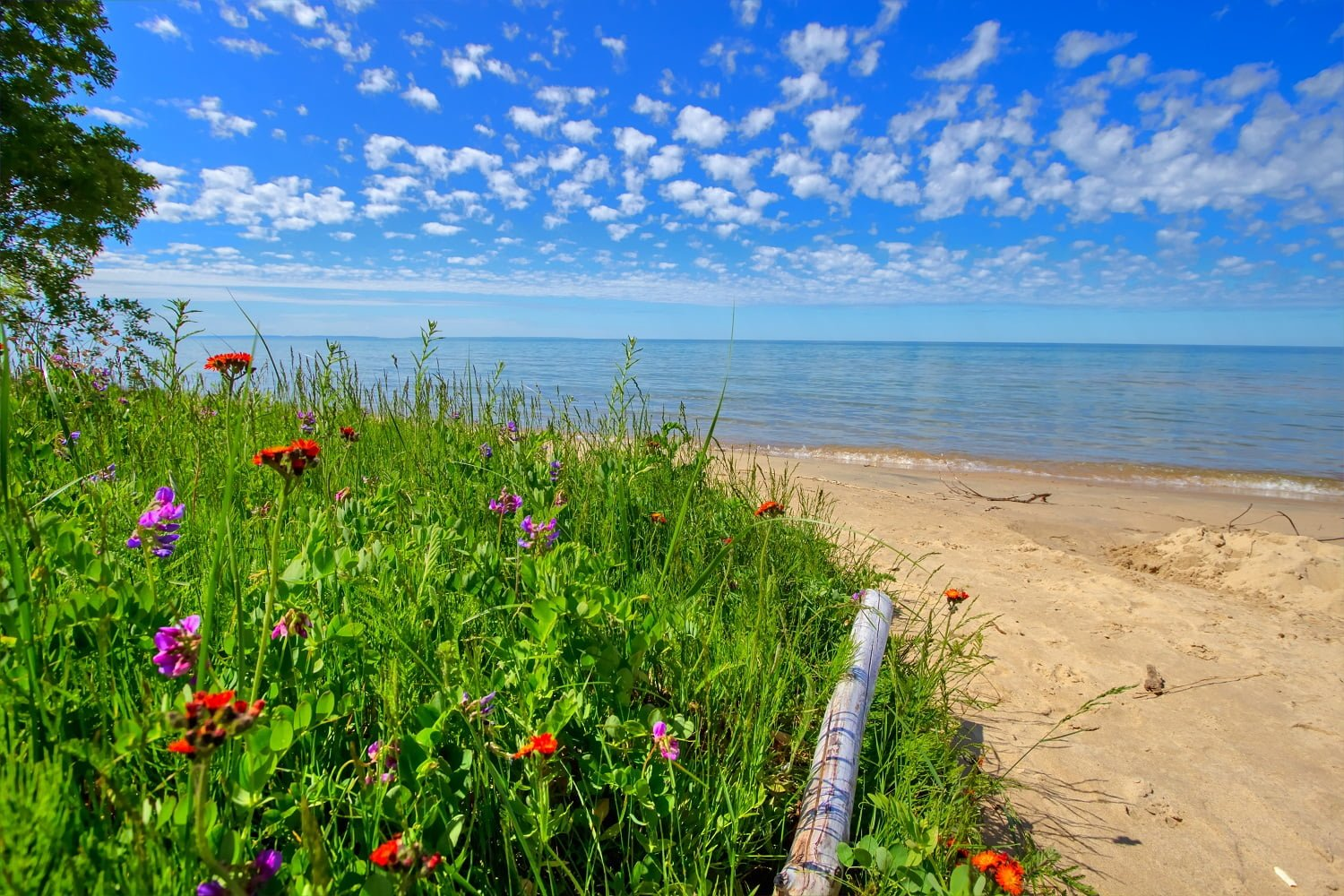 Wildflowers On The Beach