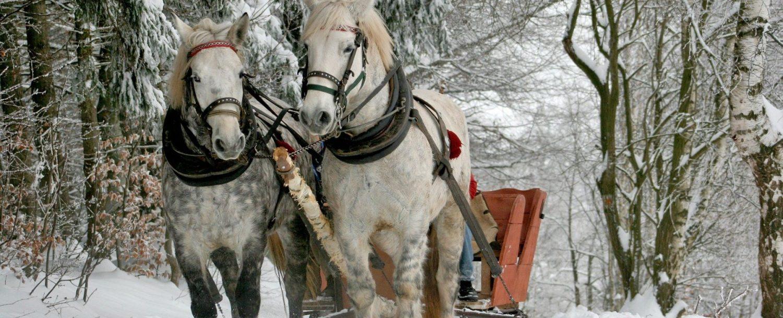 sleigh ride through a snowy forest